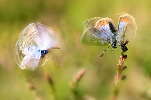 Love is in the air by Syssy Jaktman