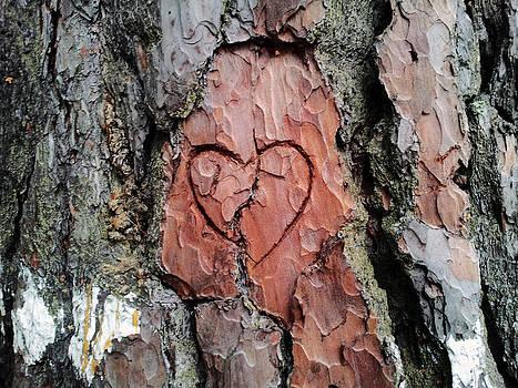 Love by Melinda Kortun