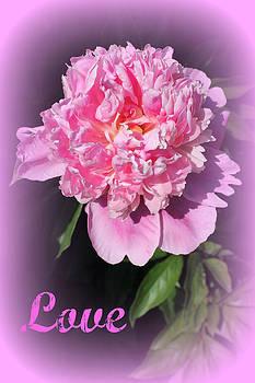 Rebecca Frank - Love Pink