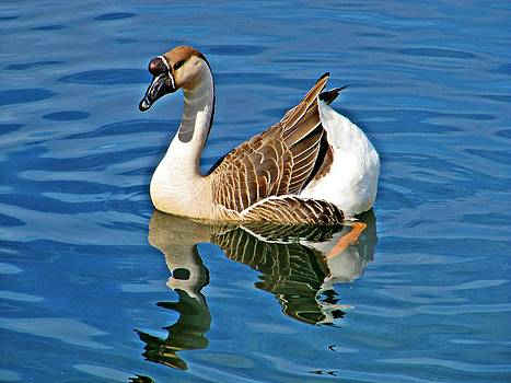 Lovely Goose by Pam Utton