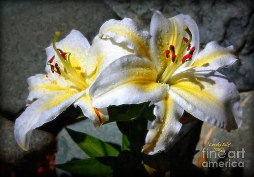 Patrick Witz - Lovely Lily