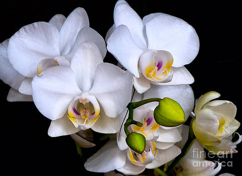 Lovely Orchids by Barbara Dawson