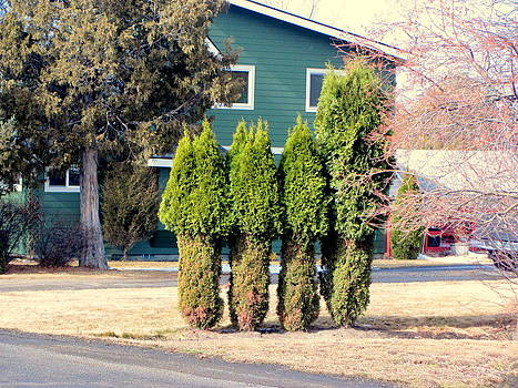 Lovely Trimmed Trees by Amy Bradley