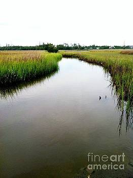 Low Country Marsh2 by Ashleigh Windham