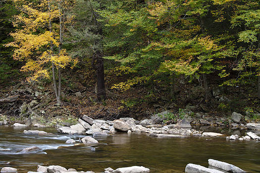 Loyalsock Creek Flowing Gently by Frank Morales Jr