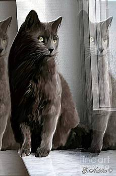 Lucky Cat by Gabriele Nedilka