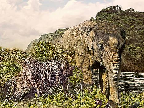 Lucky Elephant by Gabriele Nedilka