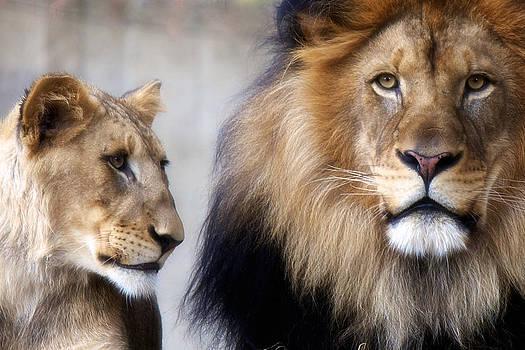 Luke and Aslan by Daniel Sands