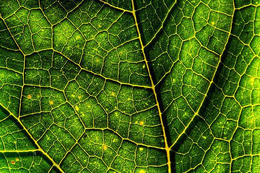 Matt Dobson - Luminescent Leaf