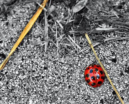Luminous Ladybug by Elaine Hodges