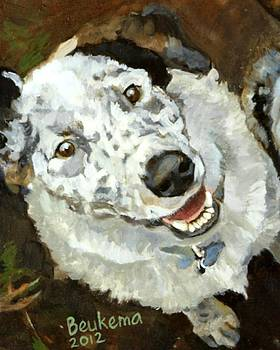 Lunacy of Cattledogs Finnegan by Debbie Beukema