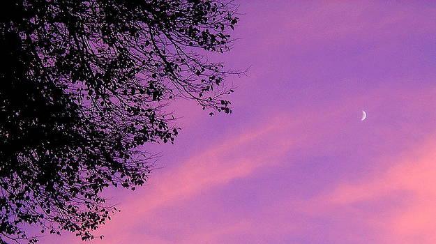 Lunar Elegance by Courtney Habrial
