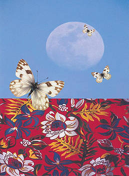 Lunar landing by Laurel Porter-Gaylord