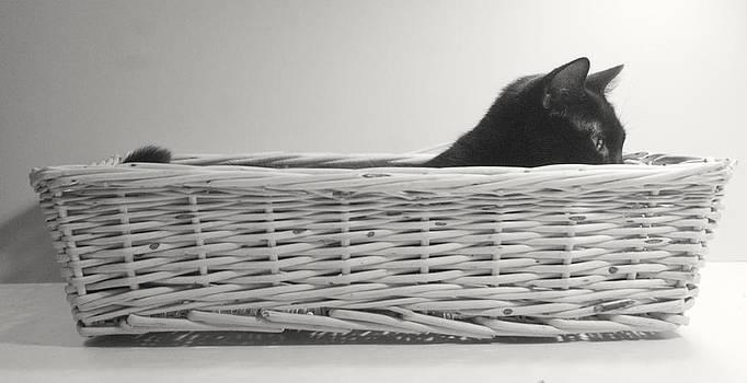 Lurking in the Basket by Bernadette Kazmarski