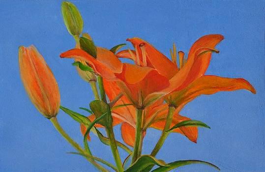 Lys Orange by Muriel Dolemieux