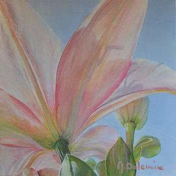 Lys Rose by Muriel Dolemieux