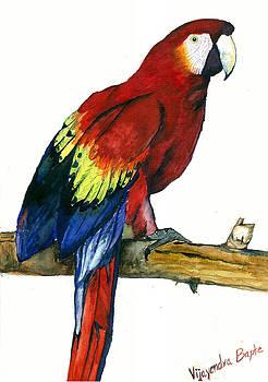 Macaw -- Parrot by Vijayendra Bapte