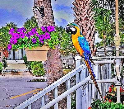 Macaw by Rick Davis