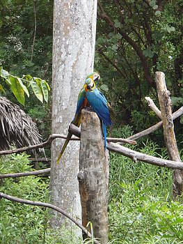 Kimberly Perry - Macaws In Love