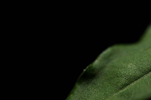 Macro Leaf by Frank DiGiovanni