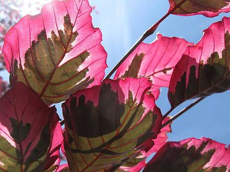 Macro Leaves by Sean Seal