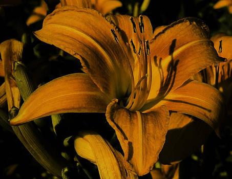 Macro Lily by Gordon H Rohrbaugh Jr