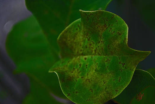 Michelle Cruz - Macro Spotted Green Leaf