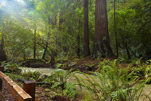 Magic Redwood Scene by Mark Gilmore