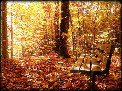 Chantal PhotoPix - Magical Sunbeams on the Best Seat in the Forest
