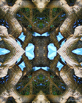 Diana Haronis - Magical Tree