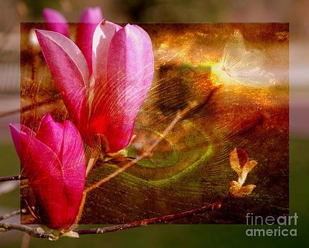 Susanne Van Hulst - Magnolia Buds