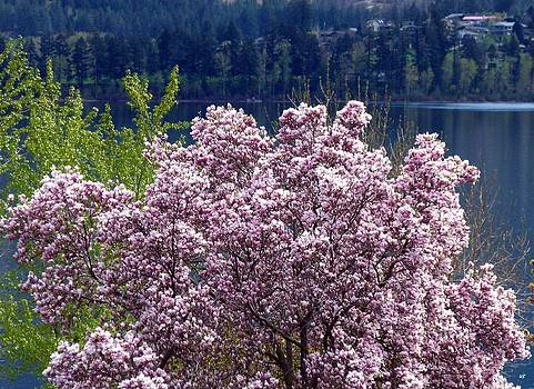 Magnolia By The Lake by Will Borden