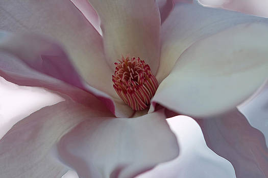Magnolia by Joan Powell