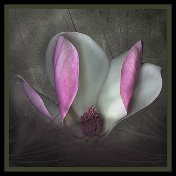 Marsha Tudor - Magnolia on Gray II