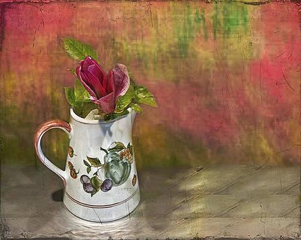 Magnolia  by Peter Davies