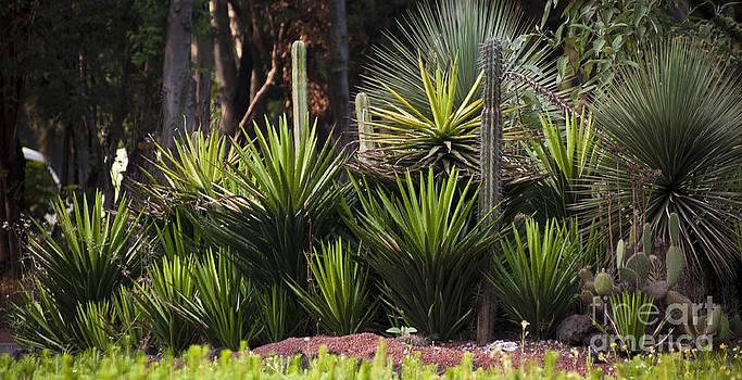 Maguey Grove by L E Jimenez