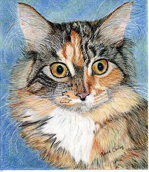 Maine Coon Kitten by Karen Curley