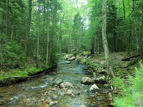 Maine Stream by KJ Waters