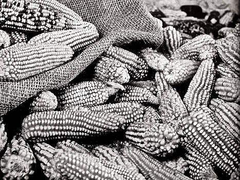 Maize by Jesus Nicolas Castanon