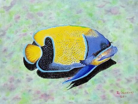 Majestic Angelfish by Riley Geddings