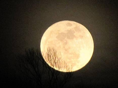 Majestic Moon by Harry Wojahn