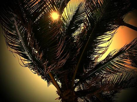 Majestic Palm by Robert Blackwell