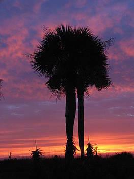 Matthew Winn - Majestic Sunrise