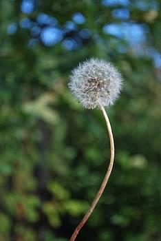Michelle Cruz - Make A Wish 2