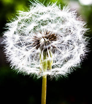 Make A Wish by Elizabeth Richardson