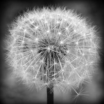 Make A Wish in Black and White by Michelle  Jackson
