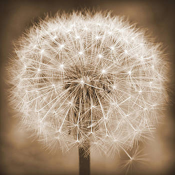 Make A Wish in Sepia by Michelle  Jackson