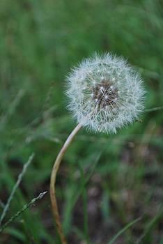 Michelle Cruz - Make A Wish