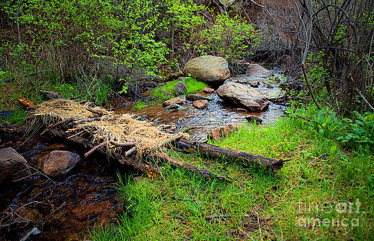 Makeshift Bridge by Barbara Schultheis