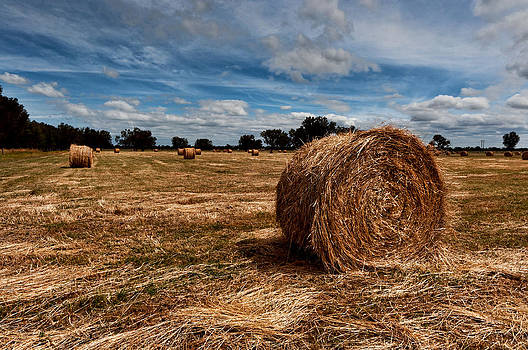 Making Hay by Heather Thorning